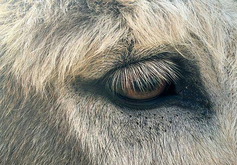 Animal Eye, Fur, Eyelashes, Donkey