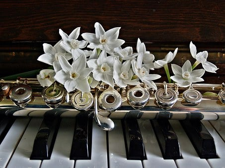 Piano, Flute, Jonquils, Flowers, Keys, Black, White