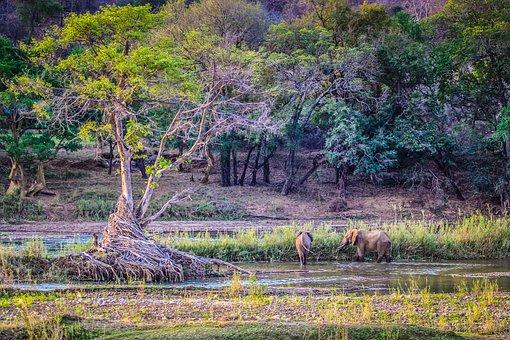 Elephants, Nature, Wildlife, Game, Conservation, Animal