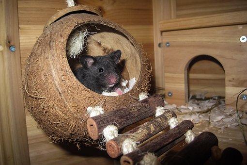 Hamster, Coconut, Sleep, Nest, Rest, Animal