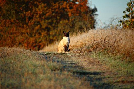 Cat, Mieze, Kitten, Away, Lane, Grass, Autumn