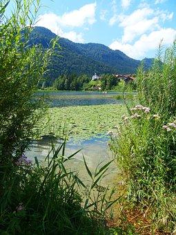 Lake Weissensee, Lake, Waters, Water Lilies, West Bank