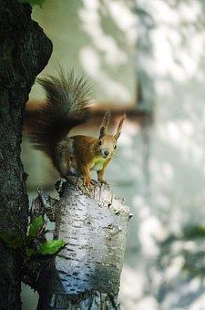 Treese, Animal, Red, Nature, Wild, Natural, Mammal