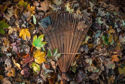 Garden, Leaves, Raking, Leaf, Nature, Work, Sun