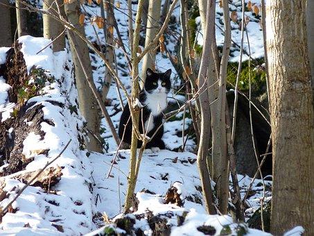 Cat, Animal, Snow, Trees, Nature