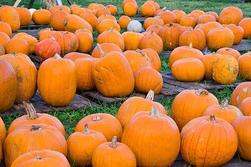 Pumpkin, Pumpkin Patch, Harvest, Fall, Autumn, Orange