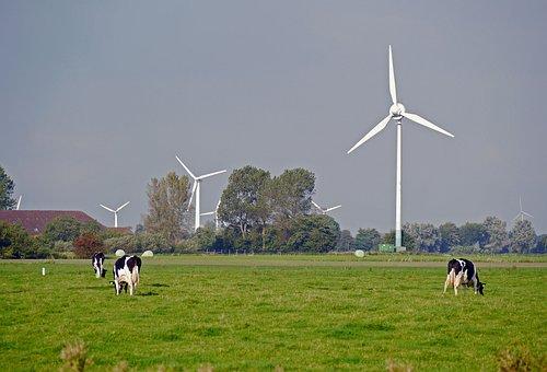 East Frisia, Pasture, Dairy Farming, Windräder