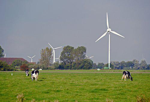 East Frisia, Pasture, Dairy Farming, Windräder