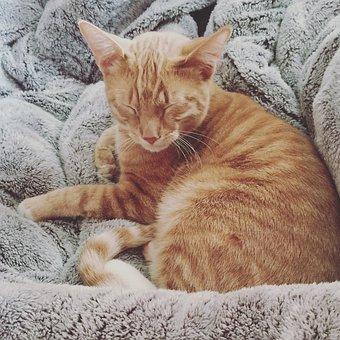 Cat, Blanket, Fluffy, Love, Cute, Pets, Rest, Feline