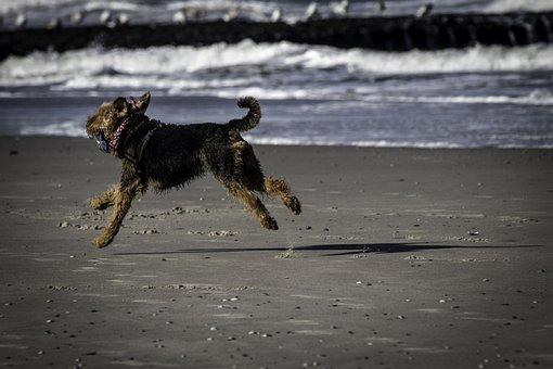Dog, Sea, Beach, Dog On Beach, Fun, Dog On Holiday