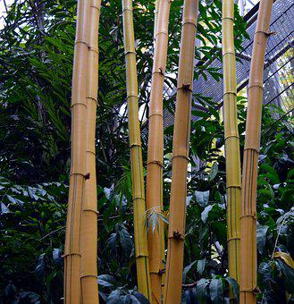 Bamboo, Tropical, Bamboo Plants, Giant Bamboo, Asia