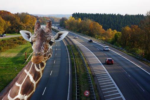 Highway, Traffic, Speed, Road, Bridge, Lane, Asphalt