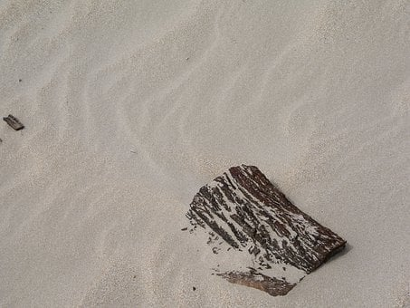 Drift Wood, Sand Pattern, Beach, Sand Ripples