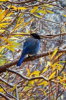 Bluebird, Jay, Branches, Wildlife, Bird, Blue, Avian