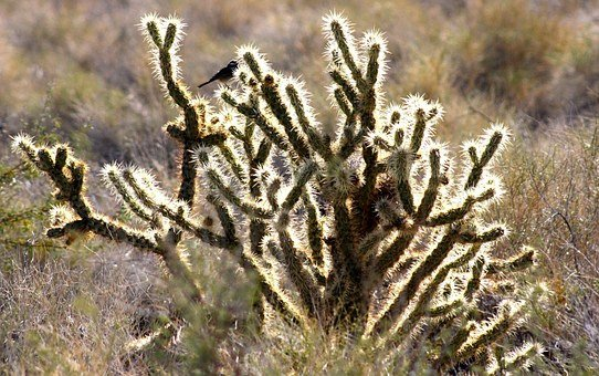 Shimmer, Bird, Cactus, Desert, Mojave, Sunlit