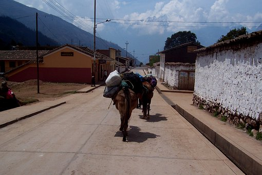 Horse, Peru, Load, Carry, Burden, Sky, Travel, Street