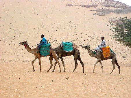 Desert, Camels, Desert Ship, Caravan, Egypt, Transport