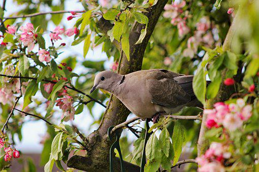 Dove, Tree, Perch, Nature, Bird, Wildlife, Animal