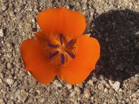 Flower, Bloom, Season, Flora, Environment, Outdoor