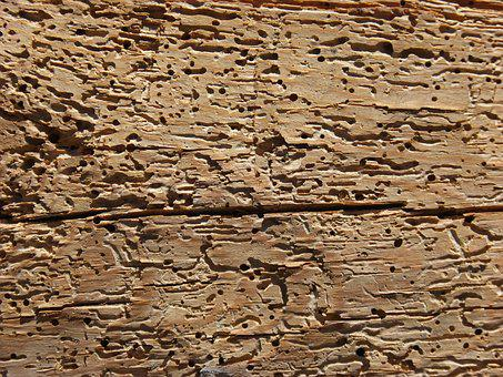 Wood, Woodworm, Rotten, Old Wood, Texture, Background