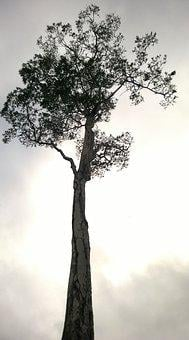 Tree, Painting, Drawing, Nature, Sustainability