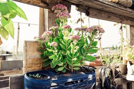 Urban Gardening, Garden, Plant, Self Catering