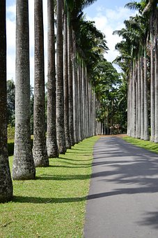 Leading Lines, Trees, Tall Trees, Path, Way, Road