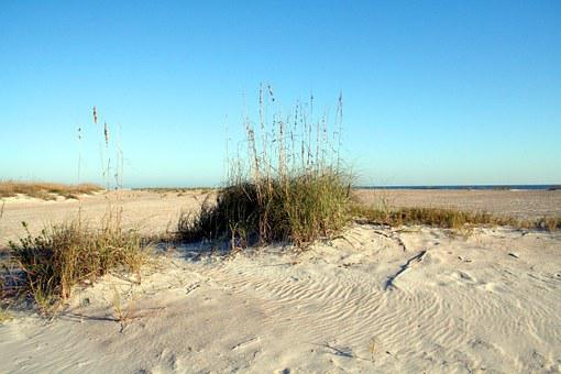 Seascape, Sea Oats, Ocean, Sand, Florida, Grass, Dune