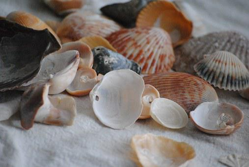 Sea Shells, Spilled Out, Nature, Summer, Beach, Sand