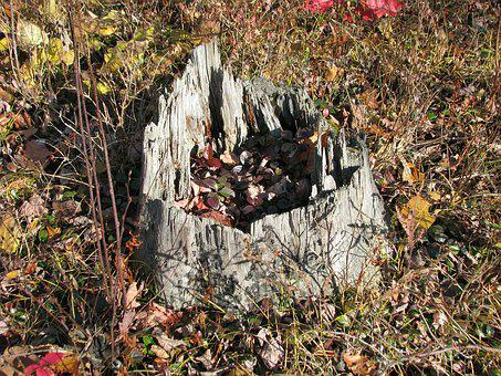 Stump, Autumn Leaves, Deer Rock Lake, Ontario, Canada