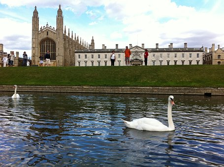 King's College, Cambridge, Uk, Swan, Building, England