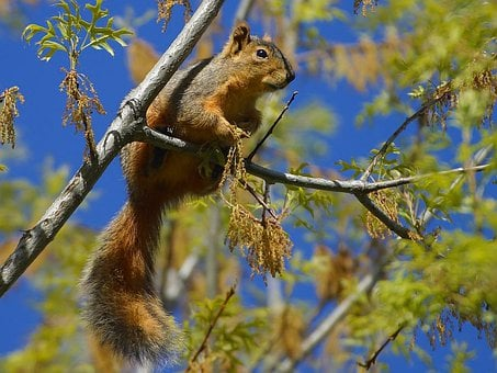 Squirrel, Chipmunk, Road, Tree, Climb, Nager, Tail