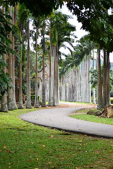 Leading Line, Road, Path, Trees, Garden, Peradeniya