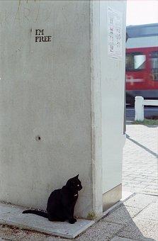 Cat, Waiting, Train, Graffiti, Street Art, Im Free