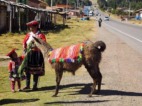 Lama, Peru, Inca, Alpaca, Sacred Valley, Nature, Wool