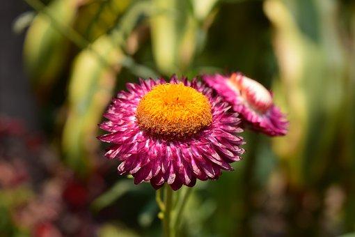 Flowers, Flower, Pollen, Natural Flowers, Yellow, Bloom