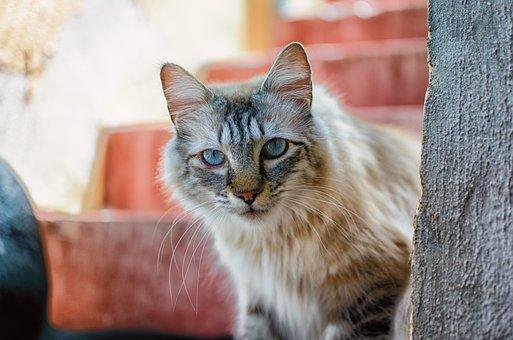 Cat, Animal, Pet, Domestic Cat, Focused