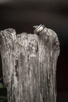 Bride And Groom, Rings, Tree, Marry, Marriage, Wedding