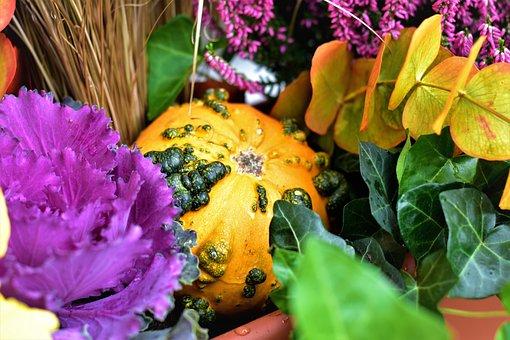 Autumn, Decoration, Gourd, Cabbage, Ornamental, Colors