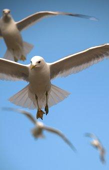 Birds, Flying, Nature, Flight, Fly, Sky, White, Animal