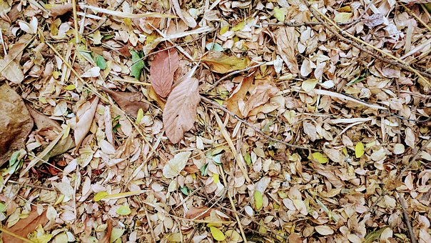 Humus, Dried Leaves, Fall, Leaves, Dry, Forest, Soil