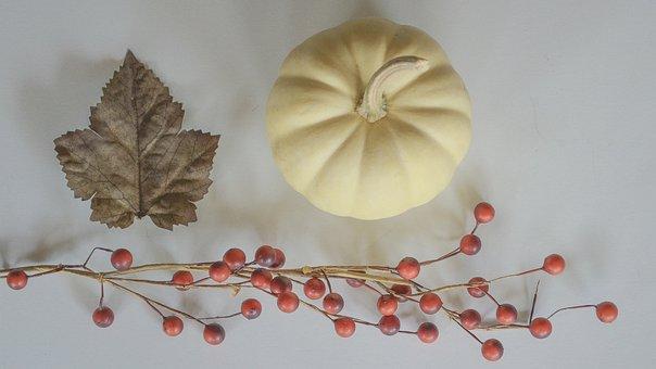 Fall, Leaf, Pumpkin, White Pumpkin, Gourds, Still Life
