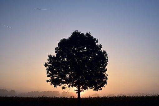 Tree, Deciduous Tree, Sunrise, Fog, Morning, Haze