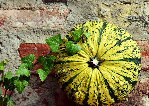Pumpkin, Gourd, Ivy, Wall, Old Brick Wall, Brick Wall