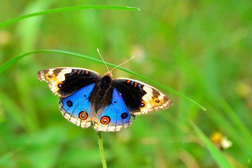 Butterfly, Kupu-kupu, Wildlife, Butterfly Isolated