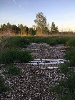 Wood, Moor, Away, Nature, Nature Reserve, Landscape