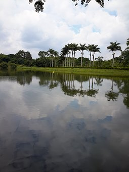 Lake, Palm Trees, Sky
