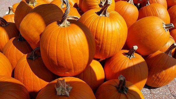 Pumpkins, Fall, Autumn, Orange, Halloween, Holiday