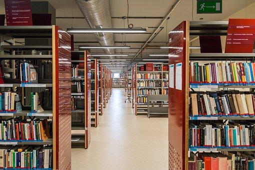 Shelf, Rack, Library, Reading, Education, The Test
