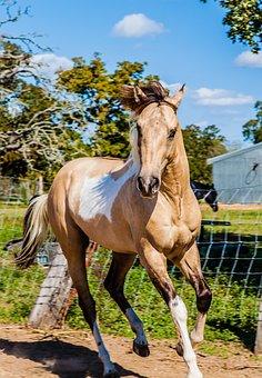Horse, Ride, Animal